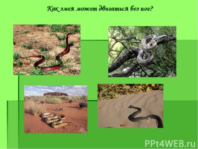 Как змея может двигаться без ног?