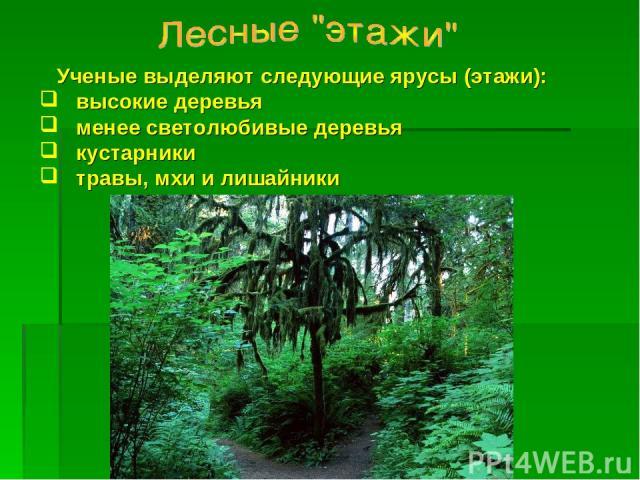 Ученые выделяют следующие ярусы (этажи): высокие деревья менее светолюбивые деревья кустарники травы, мхи и лишайники