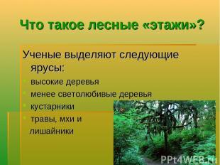 Что такое лесные «этажи»? Ученые выделяют следующие ярусы: высокие деревья менее
