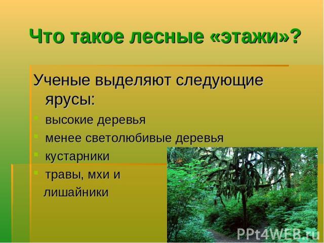 Что такое лесные «этажи»? Ученые выделяют следующие ярусы: высокие деревья менее светолюбивые деревья кустарники травы, мхи и лишайники