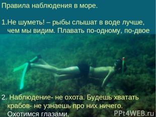 Правила наблюдения в море. Не шуметь! – рыбы слышат в воде лучше, чем мы видим.