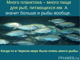 Много планктона – много пищи для рыб, питающихся им. А значит больше и рыбы вооб