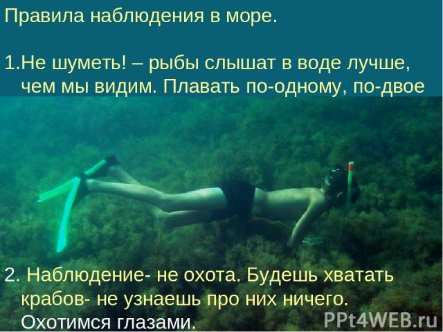 Правила наблюдения в море. Не шуметь! – рыбы слышат в воде лучше, чем мы видим. Плавать по-одному, по-двое 2. Наблюдение- не охота. Будешь хватать крабов- не узнаешь про них ничего. Охотимся глазами.