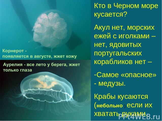 Кто в Черном море кусается? Акул нет, морских ежей с иголками – нет, ядовитых португальских корабликов нет – Самое «опасное» - медузы. Крабы кусаются (небольно ) если их хватать руками.