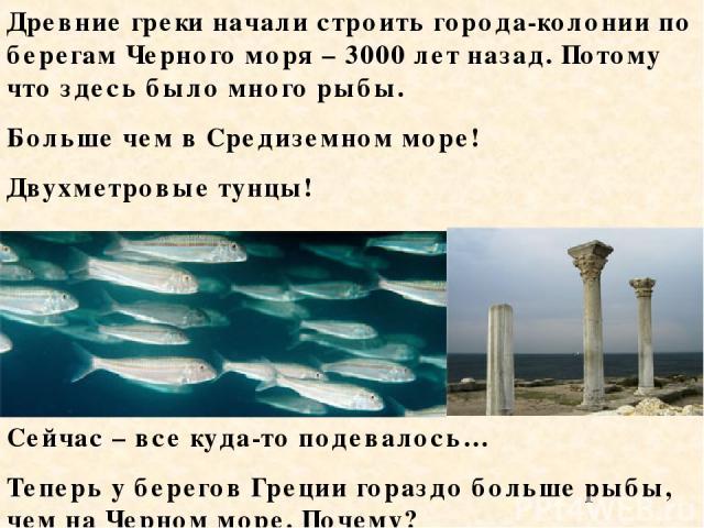 Древние греки начали строить города-колонии по берегам Черного моря – 3000 лет назад. Потому что здесь было много рыбы. Больше чем в Средиземном море! Двухметровые тунцы! Сейчас – все куда-то подевалось… Теперь у берегов Греции гораздо больше рыбы, …