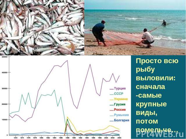 Просто всю рыбу выловили: сначала -самые крупные виды, потом помельче…