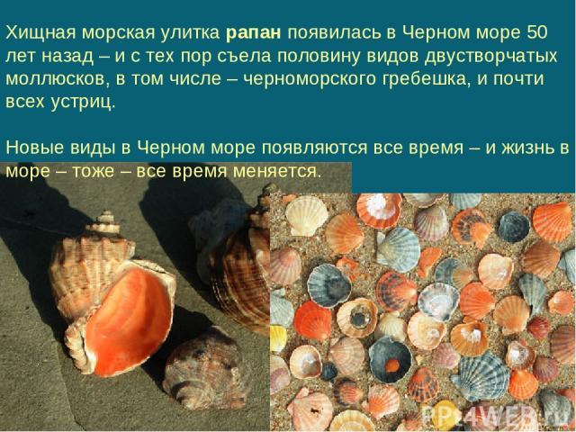 Хищная морская улитка рапан появилась в Черном море 50 лет назад – и с тех пор съела половину видов двустворчатых моллюсков, в том числе – черноморского гребешка, и почти всех устриц. Новые виды в Черном море появляются все время – и жизнь в море – …