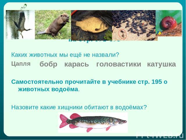 Богат и разнообразен животный мир водоёма. Познакомьтесь с ним поближе в учебнике на стр. 192-193 Каких животных мы ещё не назвали? Цапля Самостоятельно прочитайте в учебнике стр. 195 о животных водоёма. Назовите какие хищники обитают в водоёмах? бо…