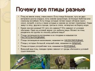 Почему все птицы разные Птиц на земле очень, очень много. Есть птицы большие, чу
