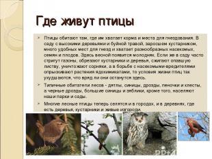 Где живут птицы Птицы обитают там, где им хватает корма и места для гнездования.