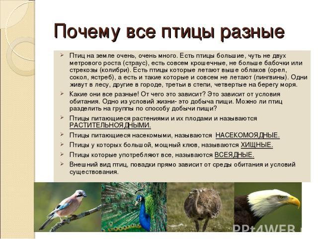 Почему все птицы разные Птиц на земле очень, очень много. Есть птицы большие, чуть не двух метрового роста (страус), есть совсем крошечные, не больше бабочки или стрекозы (колибри). Есть птицы которые летают выше облаков (орел, сокол, ястреб), а ест…