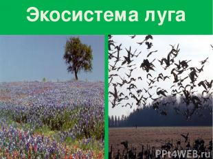 Экосистема луга