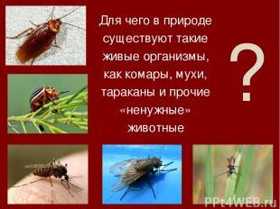 ? Для чего в природе существуют такие живые организмы, как комары, мухи, таракан