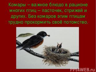 Комары – важное блюдо в рационе многих птиц – ласточек, стрижей и других. Без ко