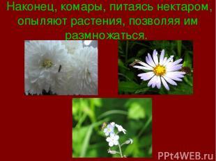 Наконец, комары, питаясь нектаром, опыляют растения, позволяя им размножаться.