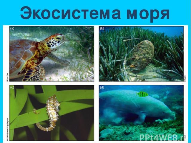 Экосистема моря