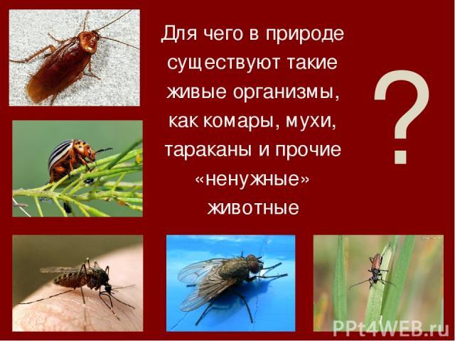 ? Для чего в природе существуют такие живые организмы, как комары, мухи, тараканы и прочие «ненужные» животные