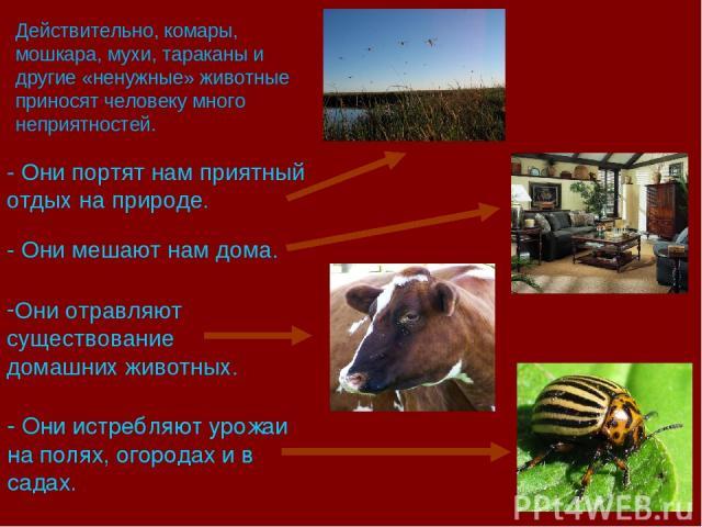 - Они истребляют урожаи на полях, огородах и в садах. Действительно, комары, мошкара, мухи, тараканы и другие «ненужные» животные приносят человеку много неприятностей. - Они портят нам приятный отдых на природе. - Они мешают нам дома. Они отравляют…