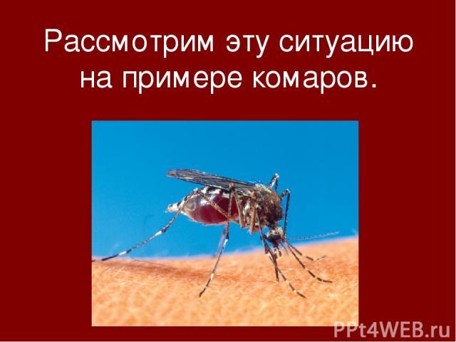 Рассмотрим эту ситуацию на примере комаров.