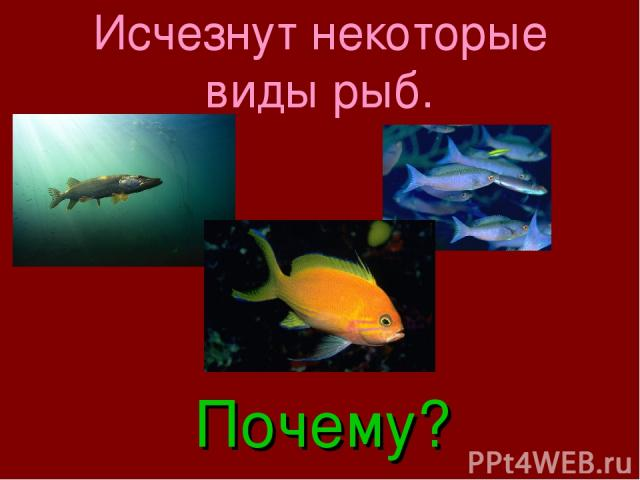 Исчезнут некоторые виды рыб. Почему?