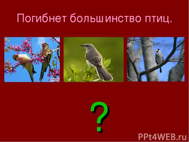 Погибнет большинство птиц. ?