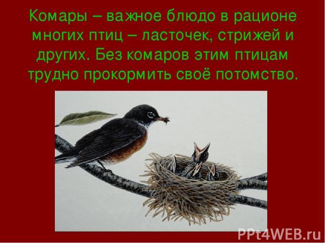 Комары – важное блюдо в рационе многих птиц – ласточек, стрижей и других. Без комаров этим птицам трудно прокормить своё потомство.