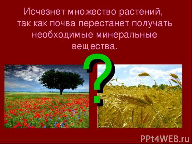 Исчезнет множество растений, так как почва перестанет получать необходимые минеральные вещества. ?