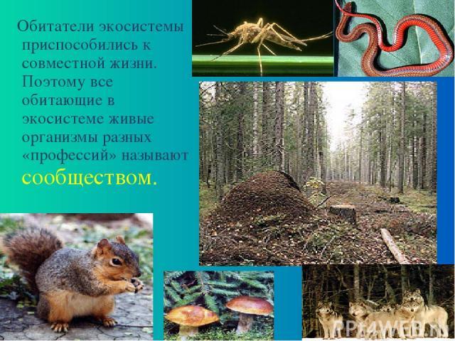 Обитатели экосистемы приспособились к совместной жизни. Поэтому все обитающие в экосистеме живые организмы разных «профессий» называют сообществом.