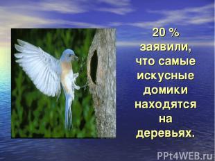20 % заявили, что самые искусные домики находятся на деревьях.