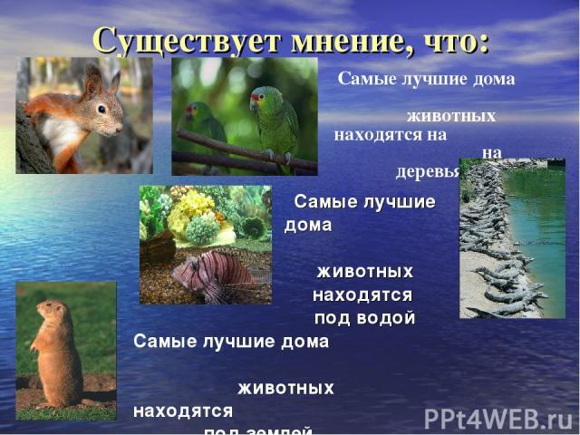 Существует мнение, что: Самые лучшие дома животных находятся на на деревьях Самые лучшие дома животных находятся под водой Самые лучшие дома животных находятся под землей