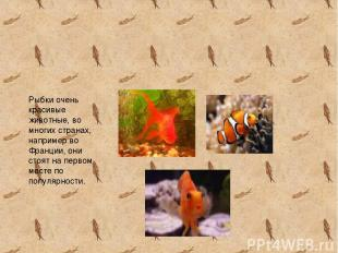 Рыбки очень красивые животные, во многих странах, например во Франции, они стоят