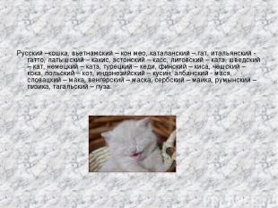 Русский –кошка, вьетнамский – кон мео, каталанский – гат, итальянский - гатто, л