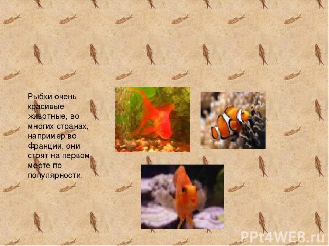 Рыбки очень красивые животные, во многих странах, например во Франции, они стоят на первом месте по популярности.