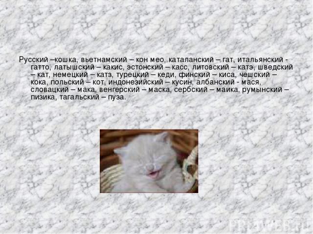 Русский –кошка, вьетнамский – кон мео, каталанский – гат, итальянский - гатто, латышский – какис, эстонский – касс, литовский – катэ, шведский – кат, немецкий – катз, турецкий – кеди, финский – киса, чешский – кока, польский – кот, индонезийский – к…