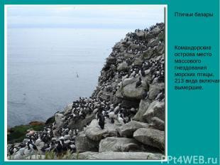 Птичьи базары Командорские острова место массового гнездования морских птицы, 21