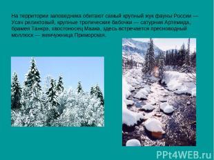На территории заповедника обитают самый крупный жук фауны России— Усач реликтов