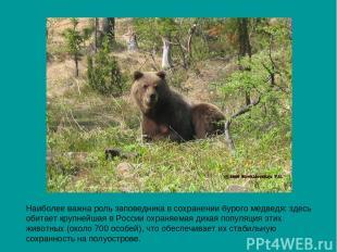 Наиболее важна роль заповедника в сохранении бурого медведя: здесь обитает крупн