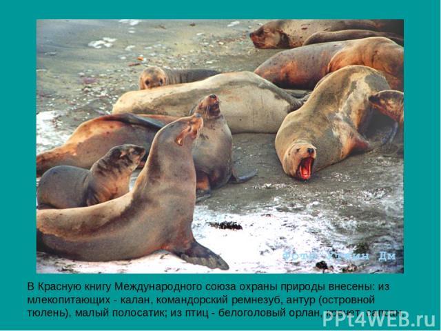 В Красную книгу Международного союза охраны природы внесены: из млекопитающих - калан, командорский ремнезуб, антур (островной тюлень), малый полосатик; из птиц - белоголовый орлан, кречет, сапсан.