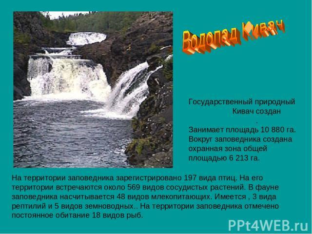 Государственный природный заповедник Кивач создан 11 июня 1931 года. Занимает площадь 10 880 га. Вокруг заповедника создана охранная зона общей площадью 6 213 га. На территории заповедника зарегистрировано 197 вида птиц. На его территории встречаютс…