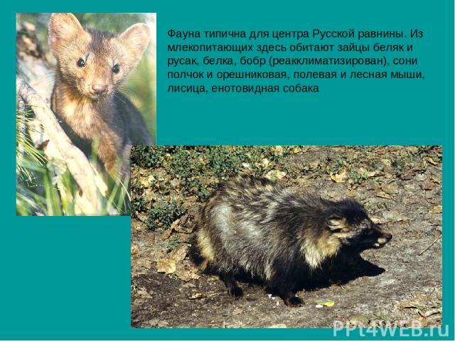 Фауна типична для центра Русской равнины. Из млекопитающих здесь обитают зайцы беляк и русак, белка, бобр (реакклиматизирован), сони полчок и орешниковая, полевая и лесная мыши, лисица, енотовидная собака