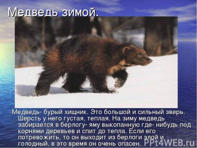 Медведь зимой. Медведь- бурый хищник. Это большой и сильный зверь. Шерсть у него густая, теплая. На зиму медведь забирается в берлогу- яму выкопанную где- нибудь под корнями деревьев и спит до тепла. Если его потревожить, то он выходит из берлоги зл…