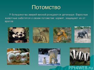 Потомство У большинства зверей весной рождаются детеныши. Взрослые животные забо