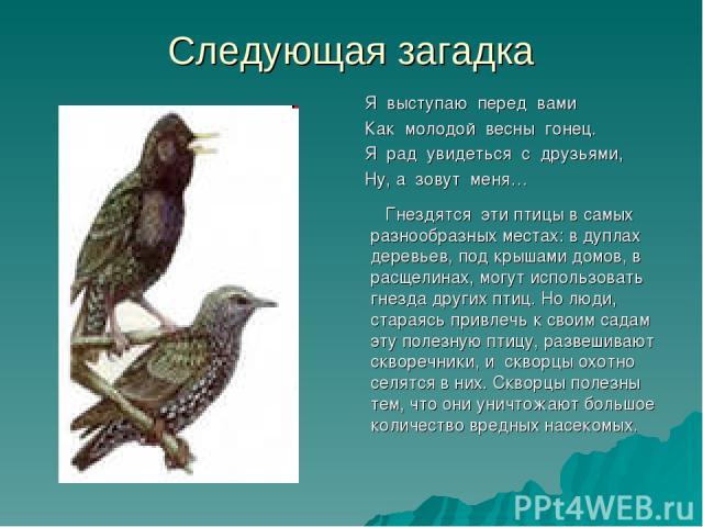 Следующая загадка Я выступаю перед вами Как молодой весны гонец. Я рад увидеться с друзьями, Ну, а зовут меня… Гнездятся эти птицы в самых разнообразных местах: в дуплах деревьев, под крышами домов, в расщелинах, могут использовать гнезда других пти…