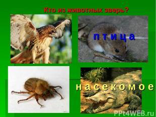 Кто из животных зверь? п т и ц а н а с е к о м о е