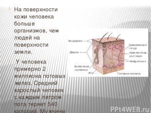 На поверхности кожи человека больше организмов, чем людей на поверхности земли.