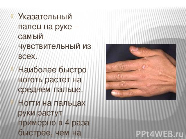 Указательный палец на руке – самый чувствительный из всех. Наиболее быстро ноготь растет на среднем пальце. Ногти на пальцах руки растут примерно в 4 раза быстрее, чем на ногах.