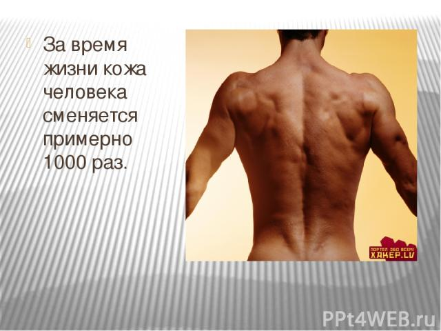 За время жизни кожа человека сменяется примерно 1000 раз.
