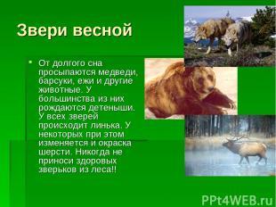 Звери весной От долгого сна просыпаются медведи, барсуки, ежи и другие животные.