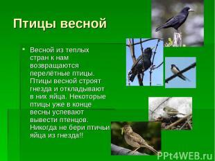 Птицы весной Весной из теплых стран к нам возвращаются перелётные птицы. Птицы в