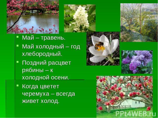 Май – травень. Май холодный – год хлебородный. Поздний расцвет рябины – к холодной осени. Когда цветет черемуха – всегда живет холод.